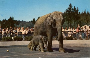 packy_baby_asian_elephant_1960s_gal
